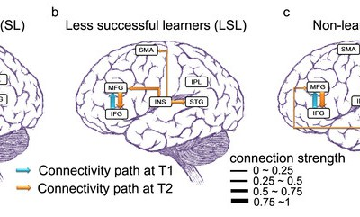 Learning languages is a workout for brains